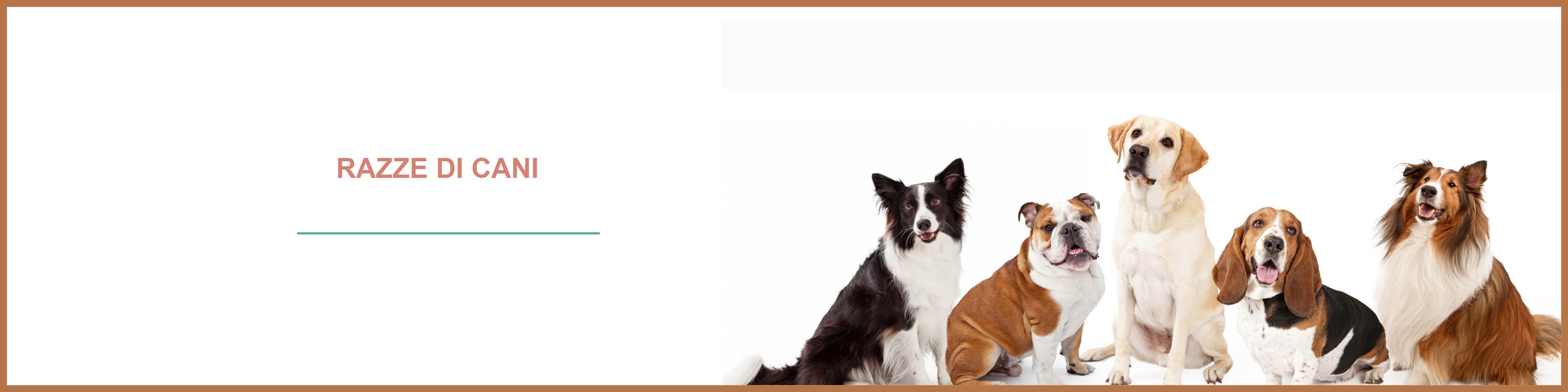 Blog cani : tutte le razze di cani, le razze dei cani