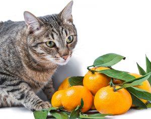 Intossicazione gatto