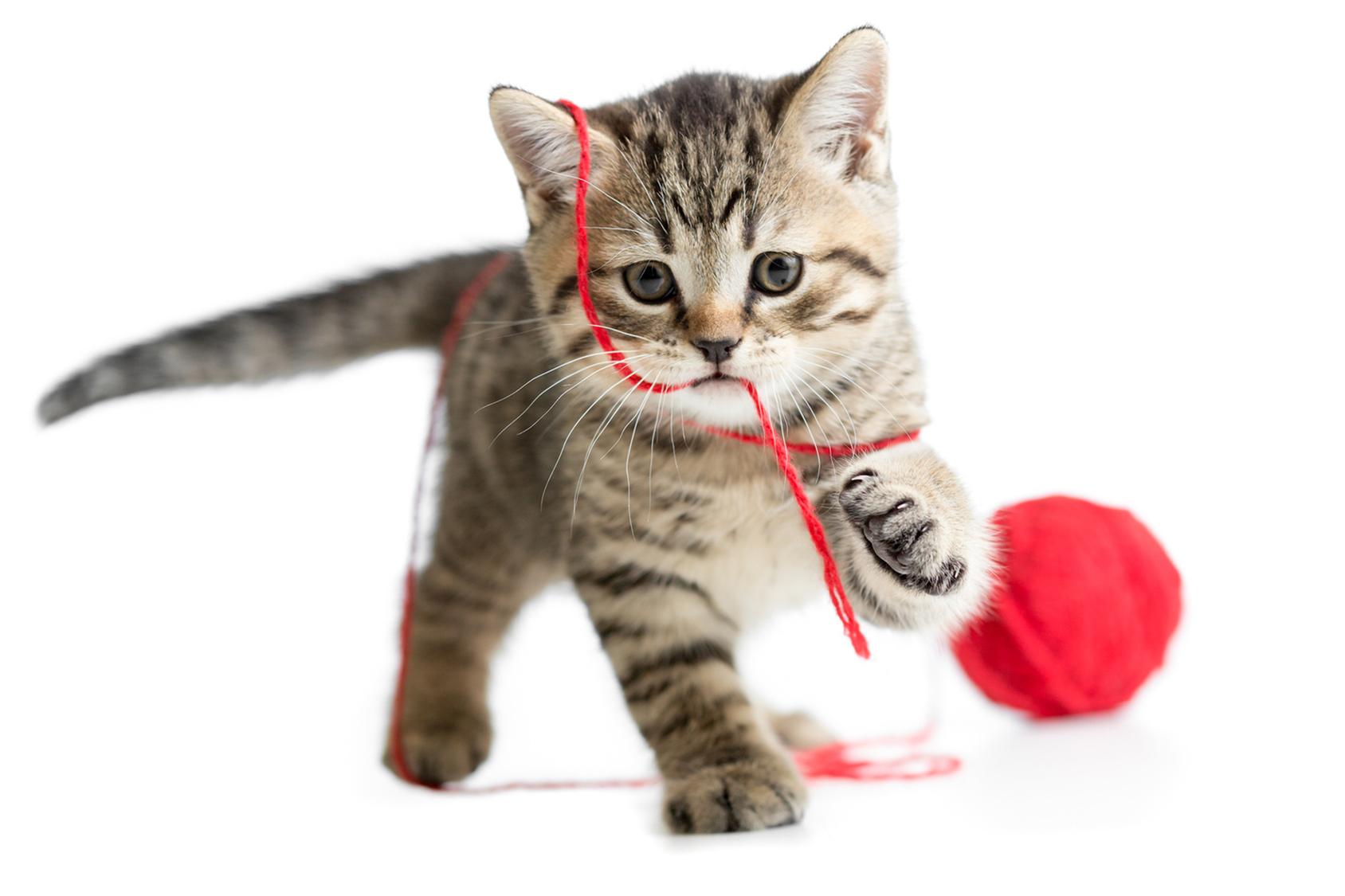 Blog gatti : Consigli per gatti