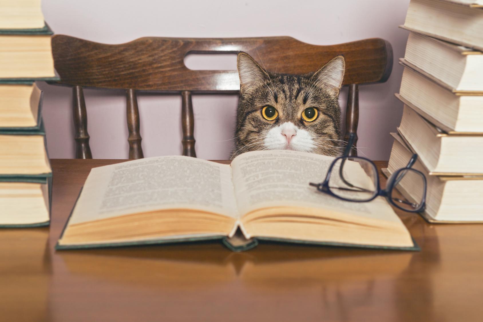 Blog gatti : educare gatto, educazione gatto