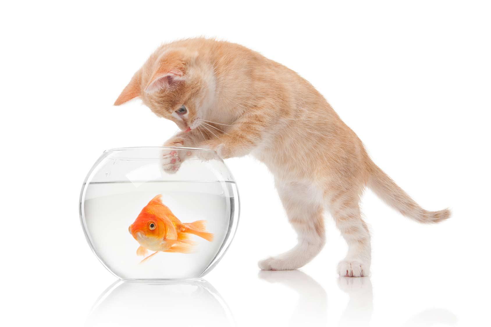Blog gatti : gatto comportamento, atteggiamenti dei gatti
