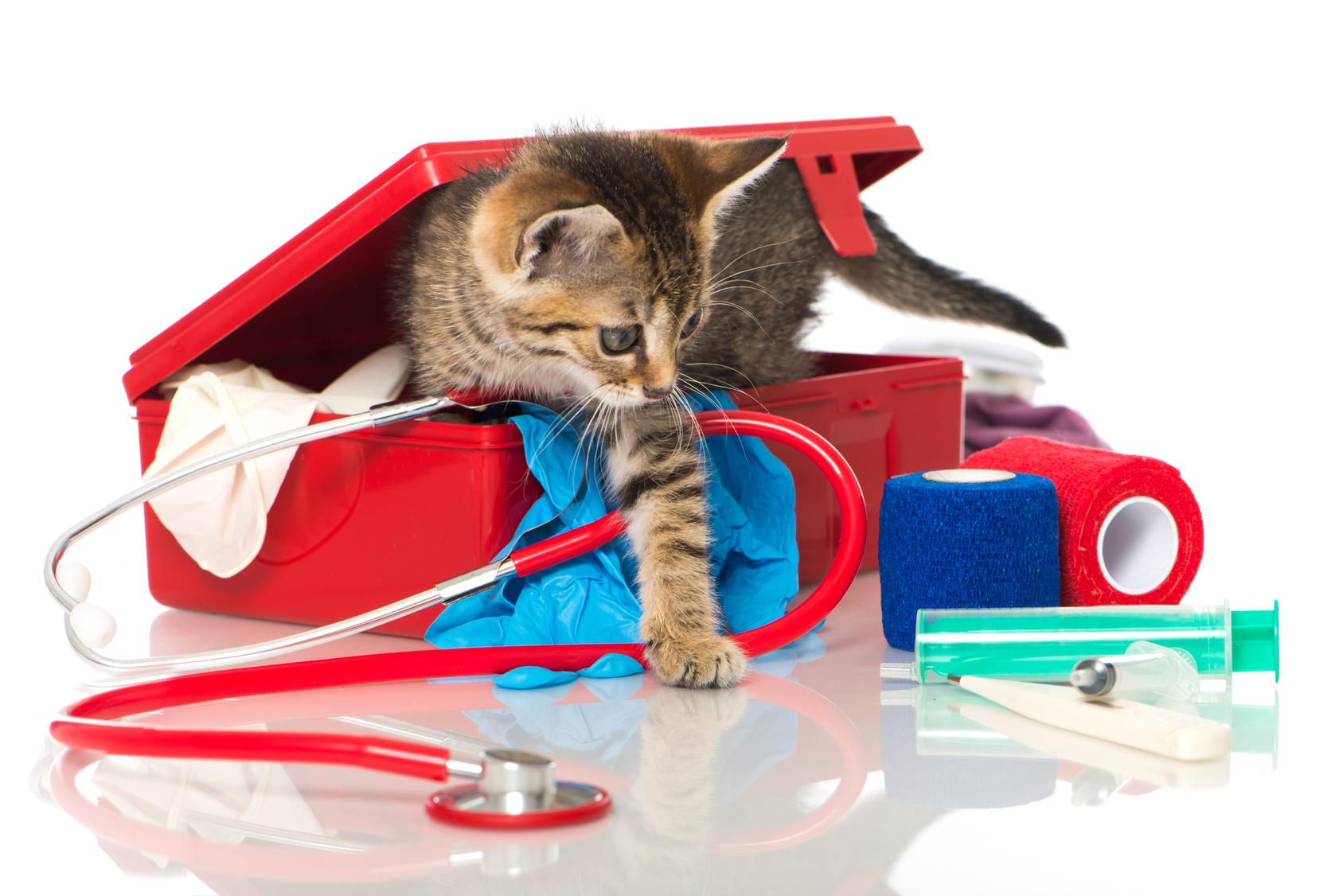 Blog gatti : malattia del gatto, salute gatto