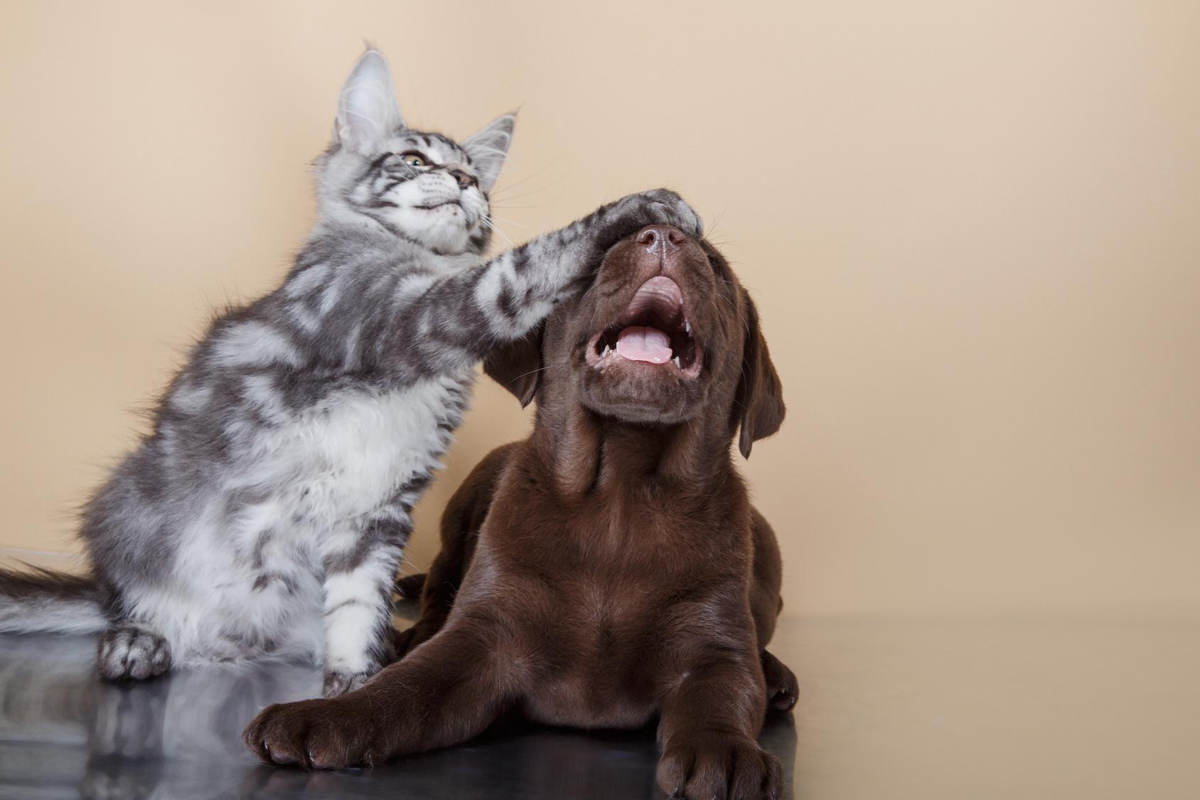 Blog gatti : Notizie, news, cani e gatti
