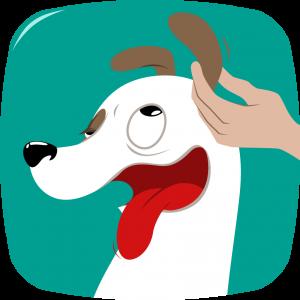 Come pulire orecchie cane ? Tutto nell'articolo