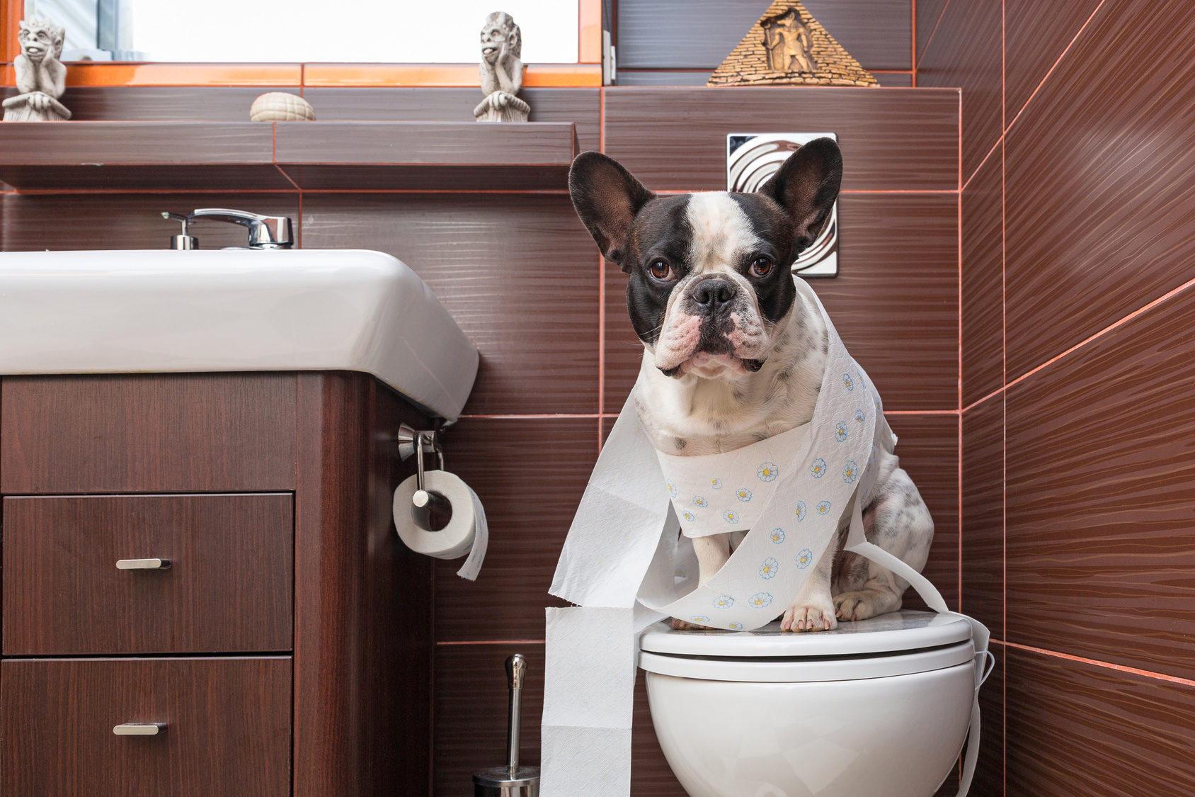 Coprofagia : Cos'è ? Cane mangia feci