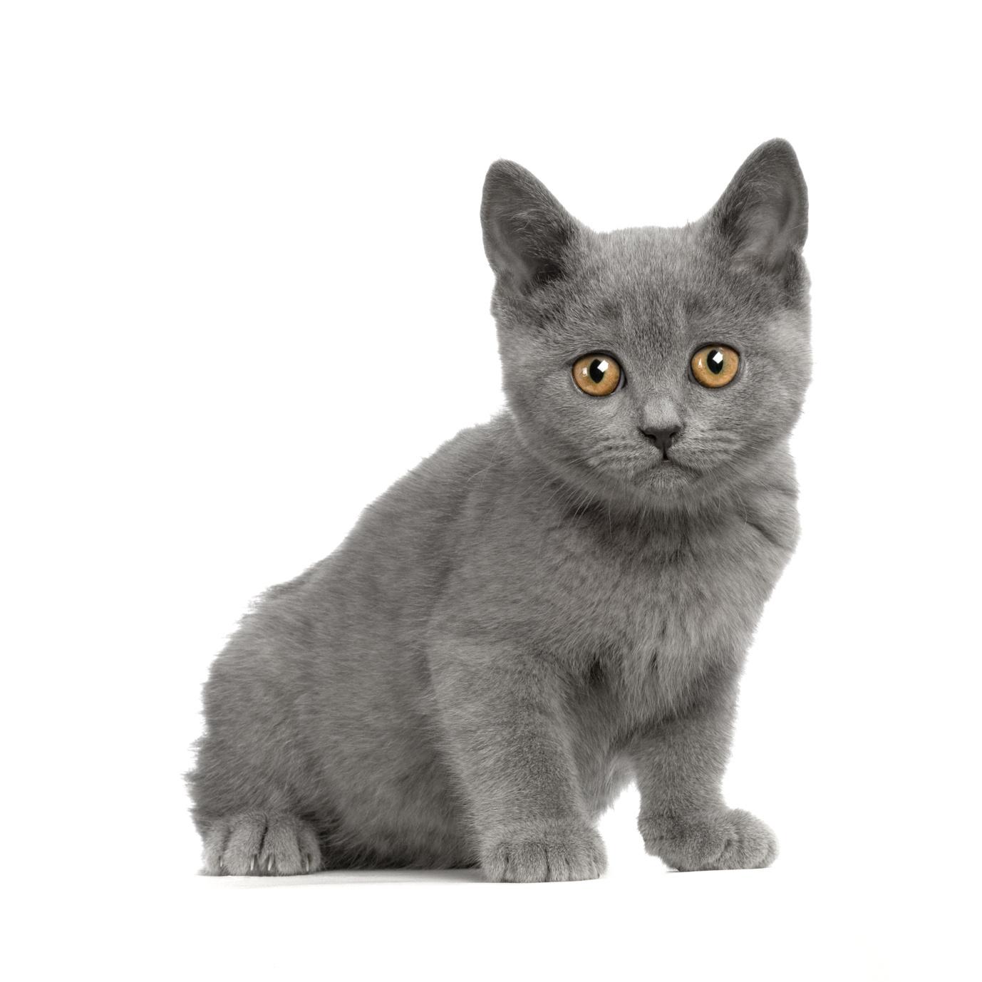 Come capire se il gatto sta male?