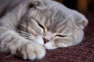 Gatto allergico : allergia gatto