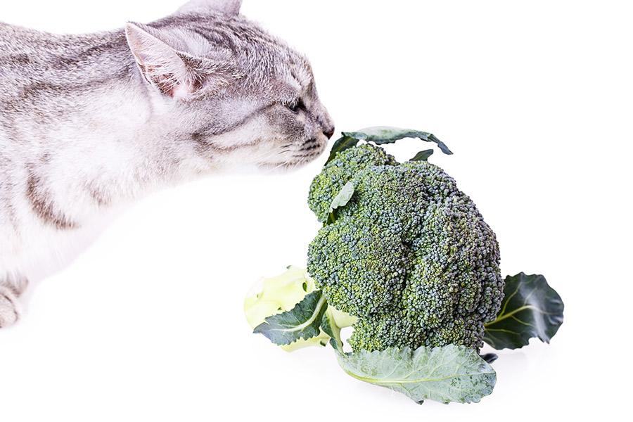 Gatto vegano o vegetariano : alimentazione