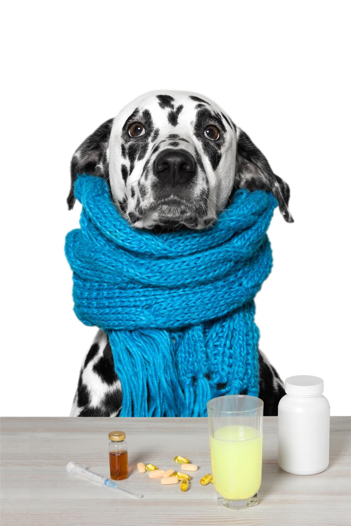Malattie cani : Capire il cane