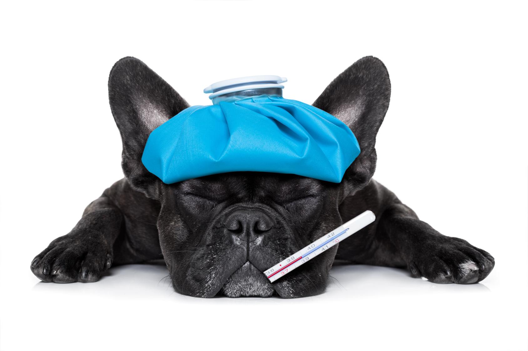 Malattie cani : Come sapere se il mio cane sta male ?