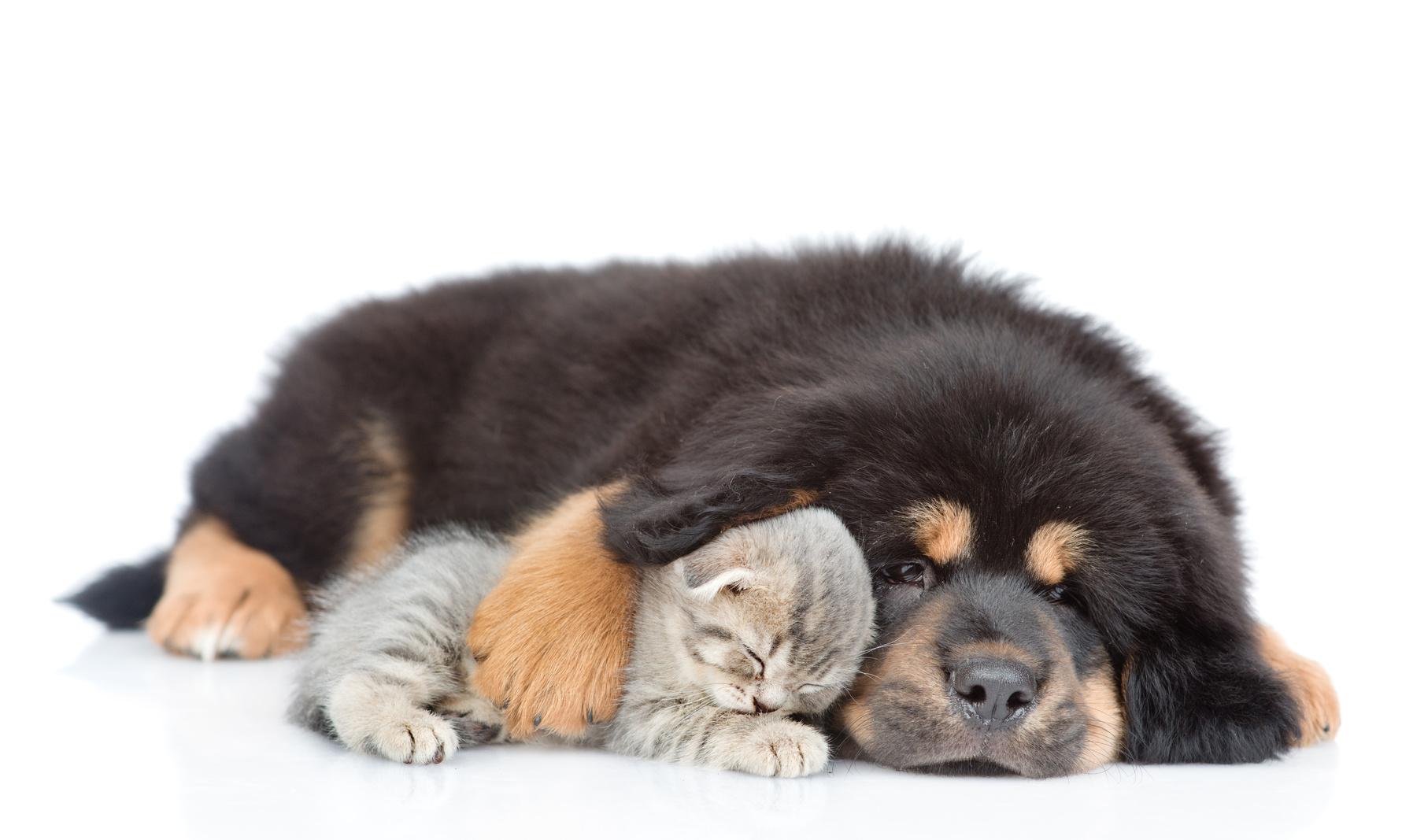 Rabbia cane, rabbia gatto : rabbia malattia
