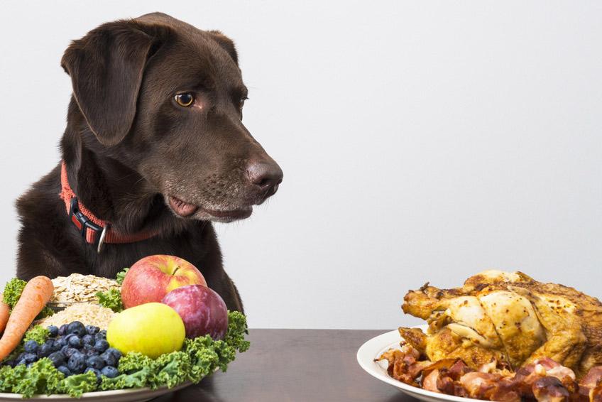 Cane vegetariano : Cibo vegano per cani