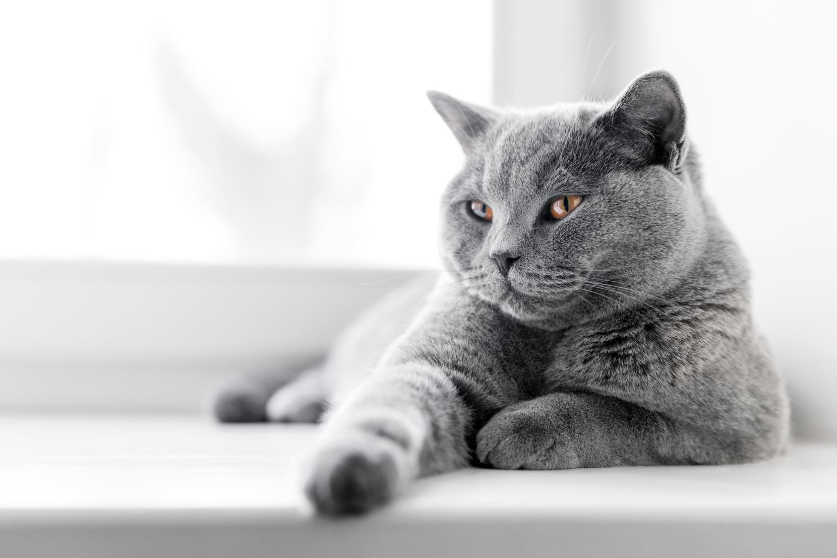 Come tenere un gatto in casa : gatto in appartamento