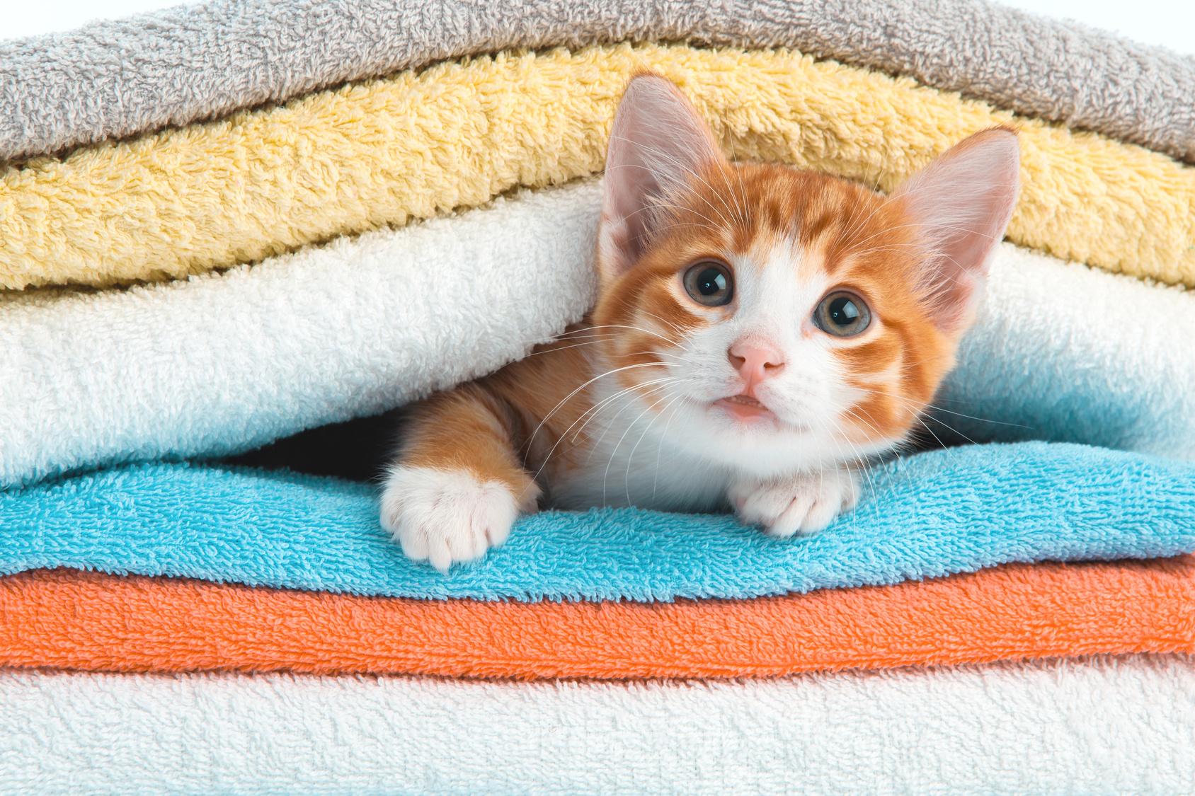 Educare gatto : punire il gatto