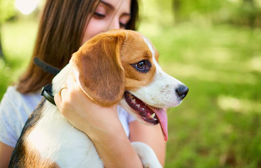 linguaggio cani : comportamento