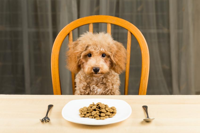 Quando il cane non mangia : cosa fare ? il cane non mangia