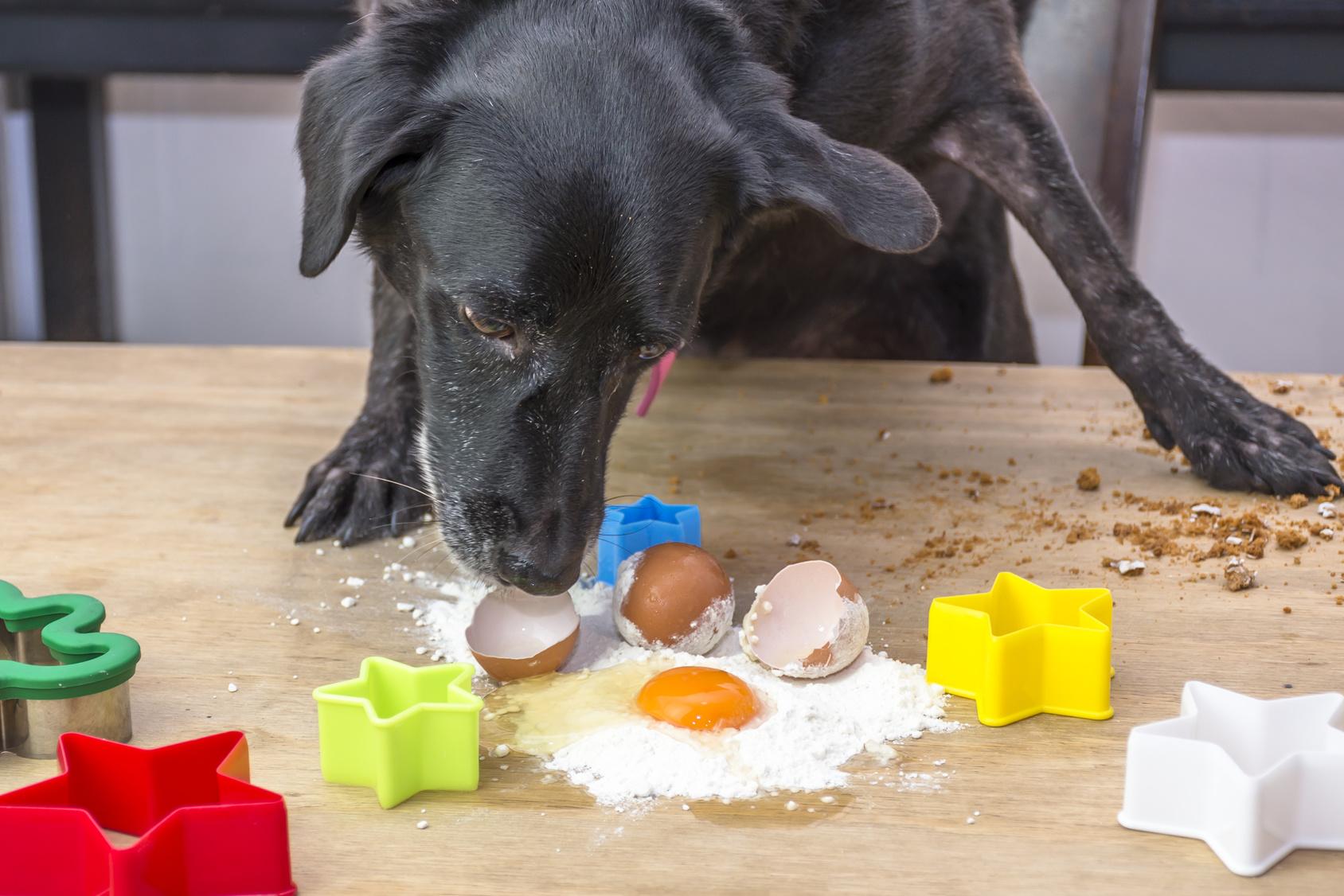 Uova cane : benefico o no per l'alimentazione del cane