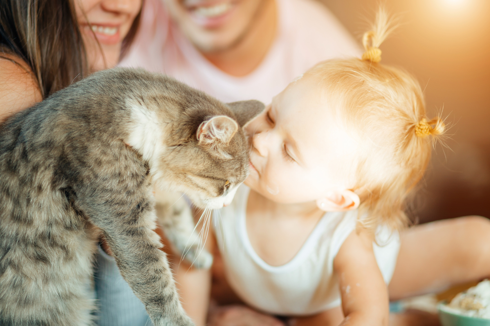 Cat sitter prezzi , famiglia affidataria
