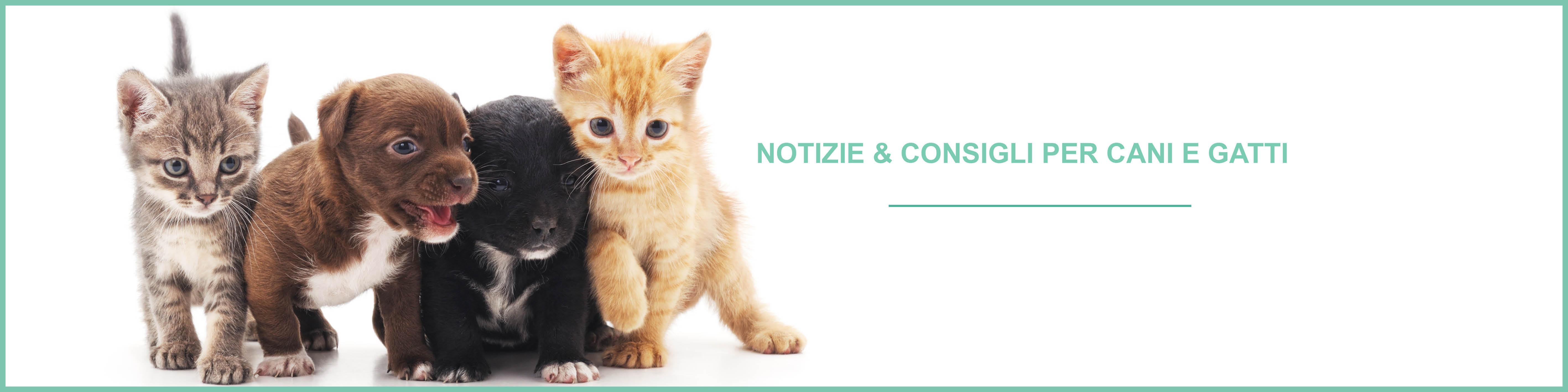 Notizie e consigli cani e gatti