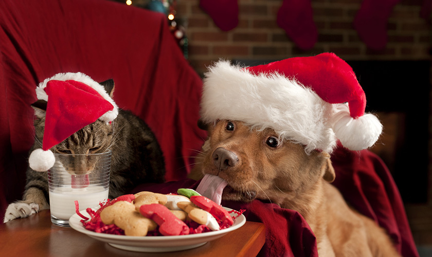 Cena di natale : cibi che possono mangiare i cani e i gatti