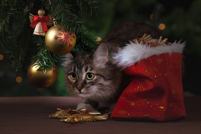Gatti e albero di natale : come allontanare i gatti