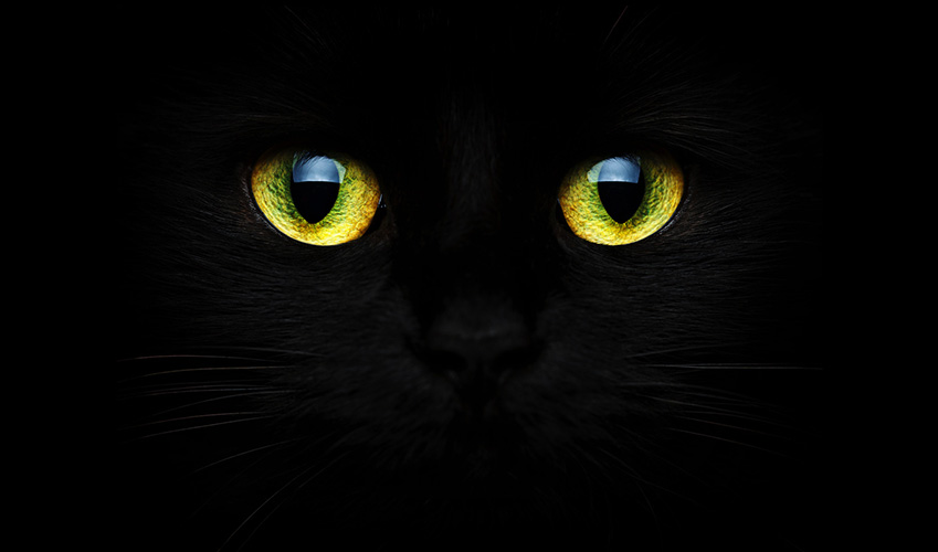 I gatti vedono al buio : Perche i suoi occhi si illuminano al buio