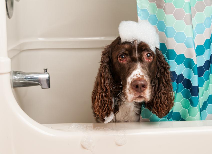 Come lavare il cane : shampoo cane