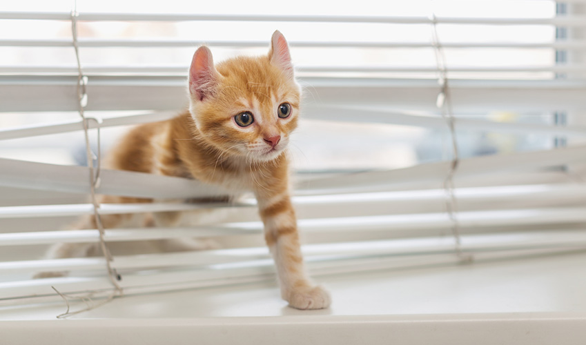 impedire al mio gatto di irrompere nella casa del vicino