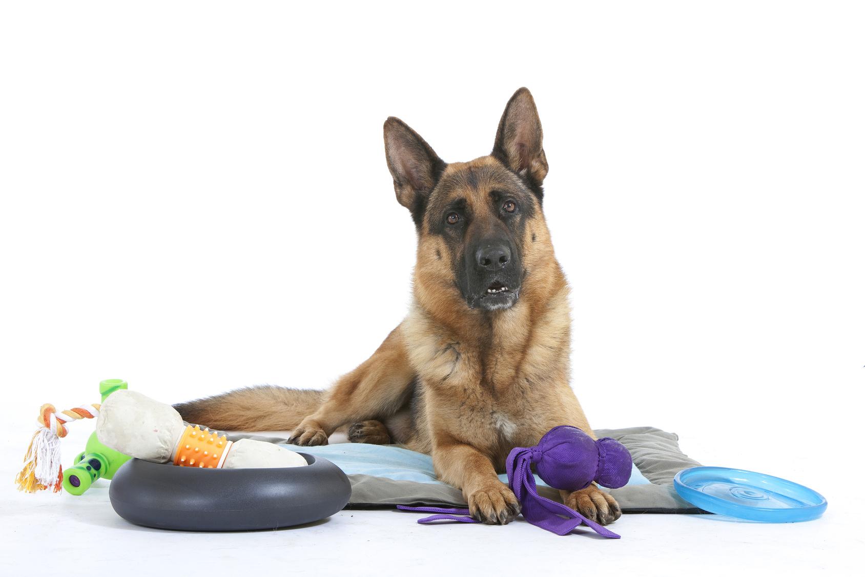 Pastore tedesco : Tutte le razze di cani