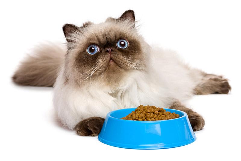 Gatto che non mangia : perche il mio gatto non mangia?