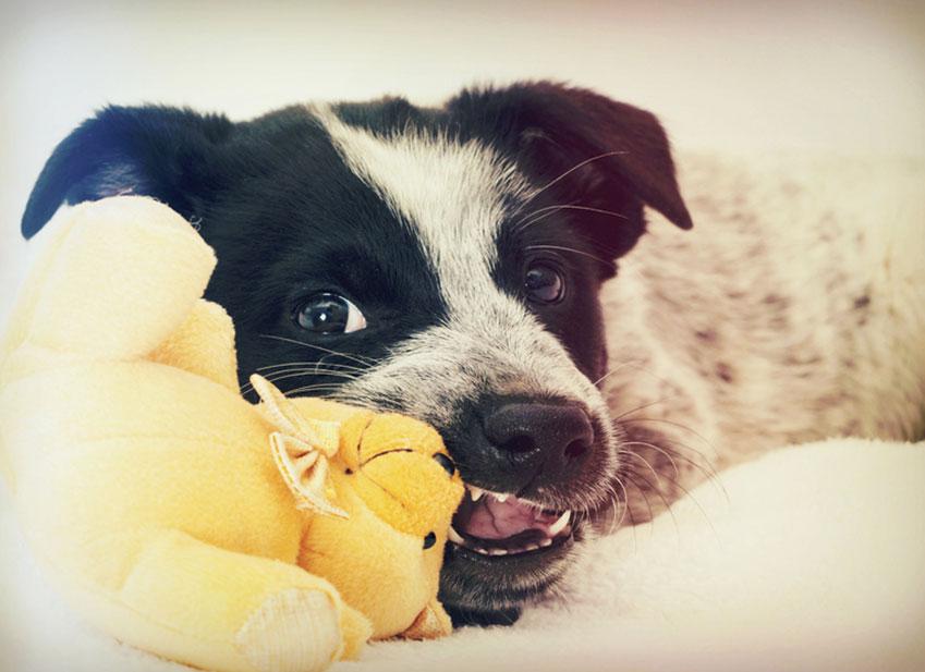 Educare cane : il mio cane mangia tutto quello che trova