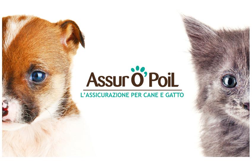 Assicurazione sanitaria cane e assicurazione gatto : condizioni