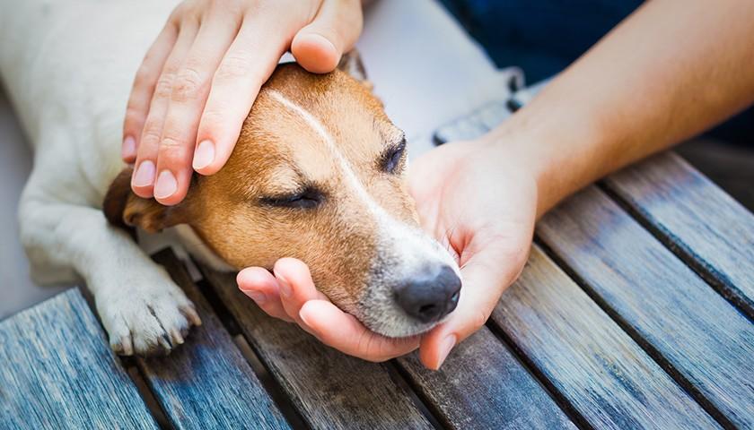 Come accarezzare un cane, dove accarezzare un cane