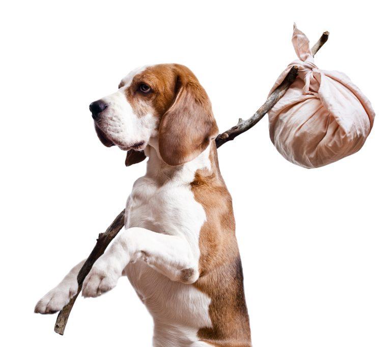 Ricerca animali smarriti : ho perso il mio cane, cosa fare ?