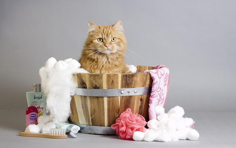 Come lavare il gatto : Come fare il bagno al gatto