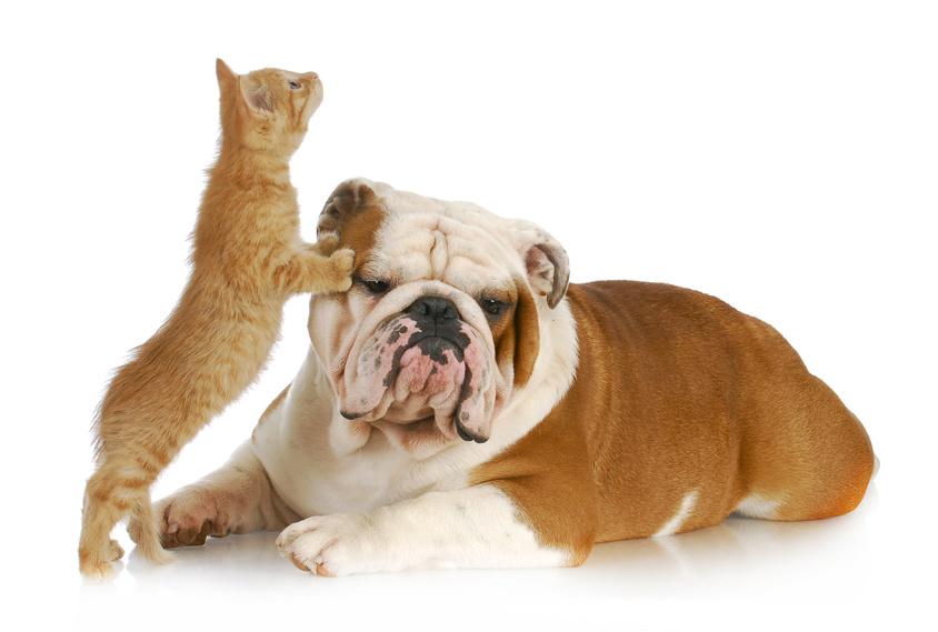 Eta dei cani e età dei gatti per assicurazione