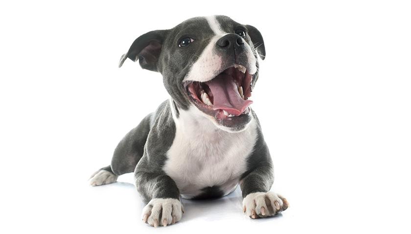 I cani hanno sentimenti =, psicologia cane, comportamento cane