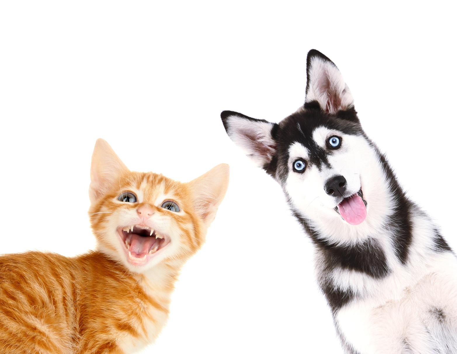 Certificato buona salute cane e gatto