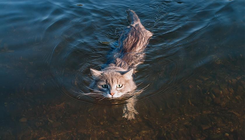 I gatti sanno nuotare ?