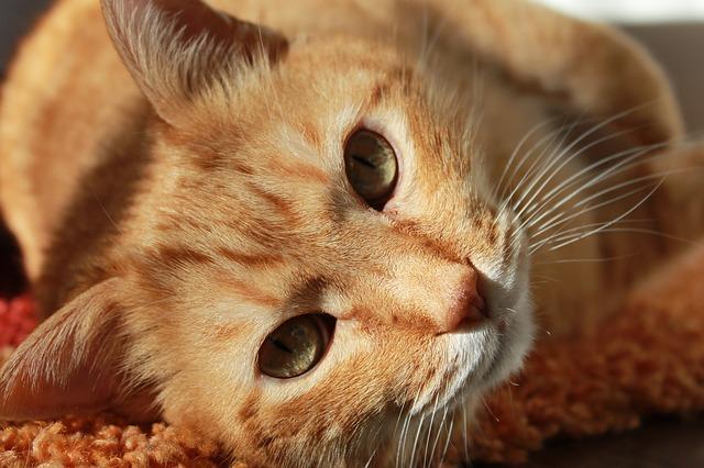 Migliore assicurazione cane e assicurazione gatto con Assur O'Poil