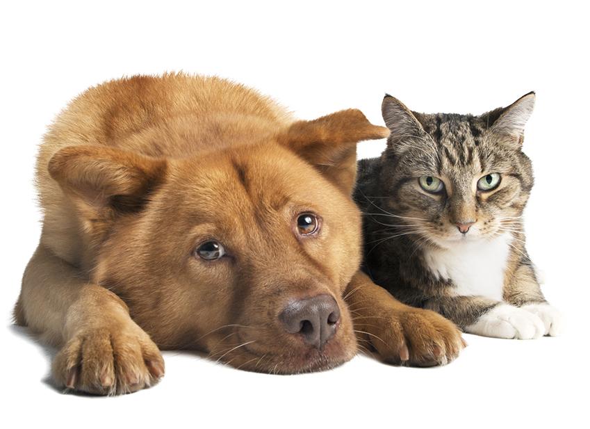 Polizza sanitaria animali domestici : Aderire senza questionario sulla salute