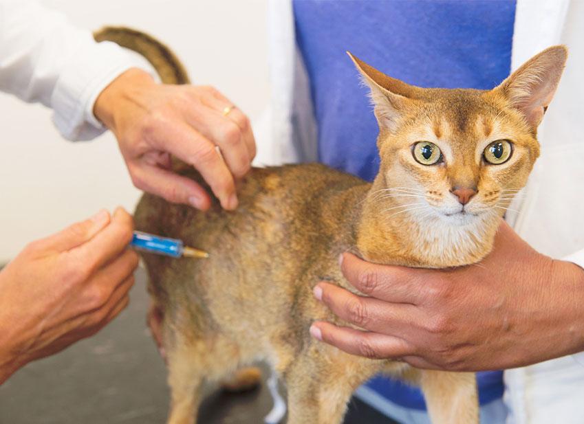 Vaccini per gatti : importante!