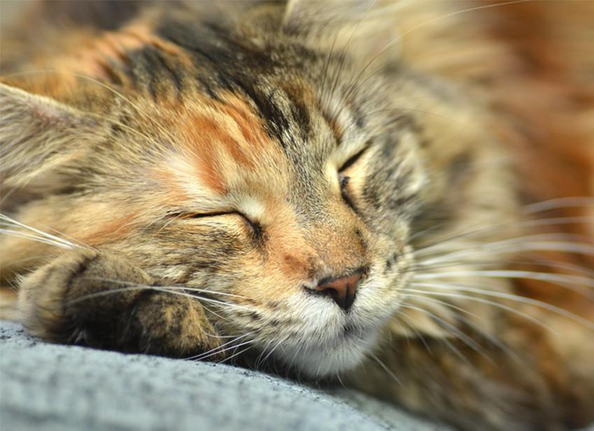 I gatti soffrono il caldo ? precauzioni da prendere