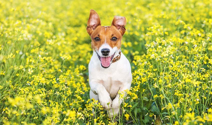 Puntura vespa cane : come proteggerlo
