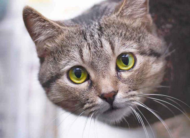 Viaggiare con gatto : trasportino gatto