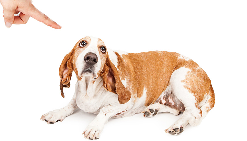 Come punire il cane : educazione cane