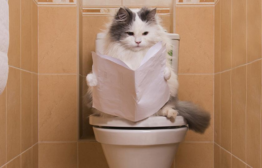 Educare gatto affinche usi il wc