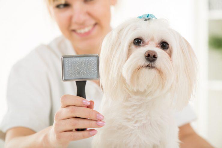 Spazzola peli cane : come spazzolare il cane