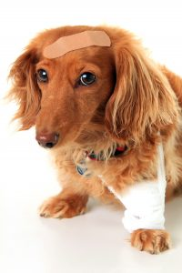 Cane in casa : pericoli domestici