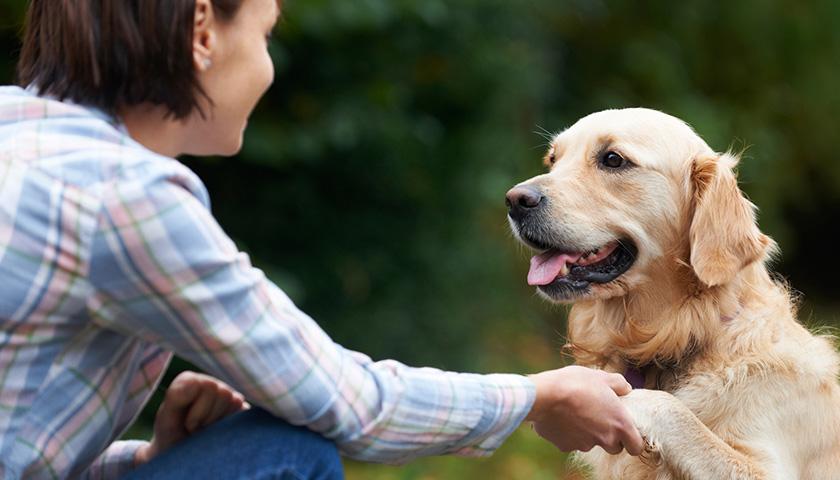 Come comunicare con i cani? Parlare con il cane